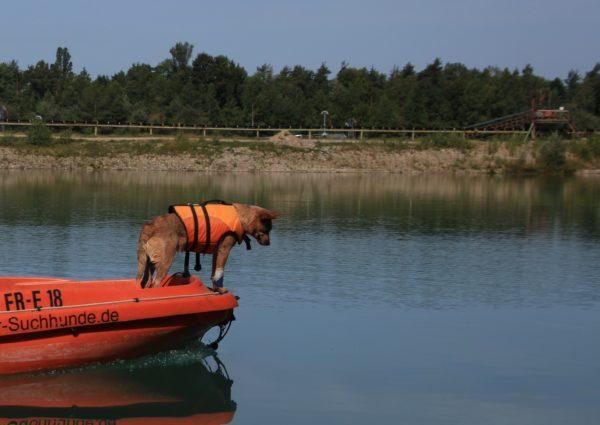 Suchhundestaffel-Hund auf Boot